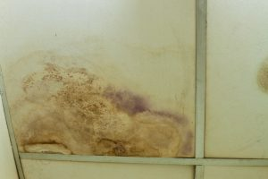 mold cleanup north charleston, mold damage north charleston