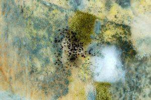 mold cleanup north charleston