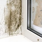 mold cleanup north charleston, mold damage cleanup north charleston