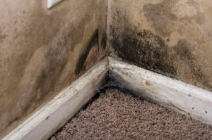 mold cleanup north charleston, mold damage north charleston